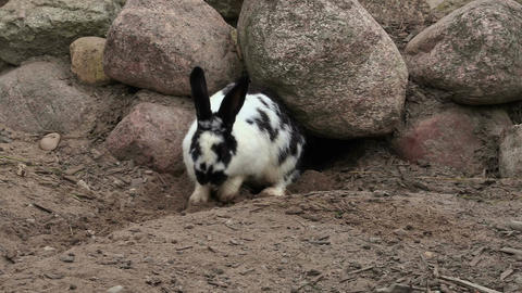 Rabbit near to the cave Footage