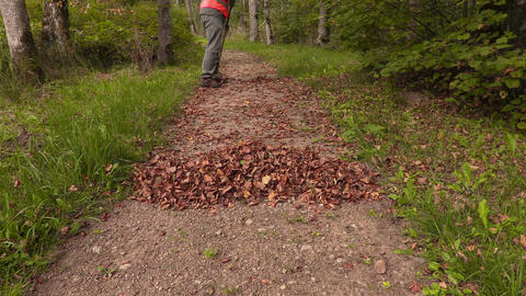 Park staff collect leaves in park Footage