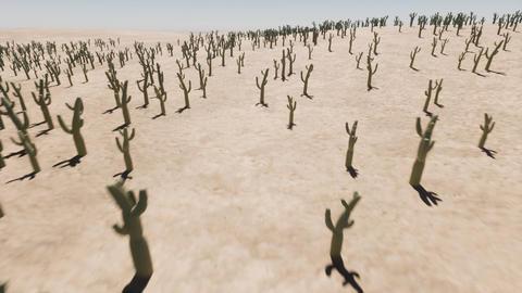 Cactus sand hot desert Natural landscape Live Action
