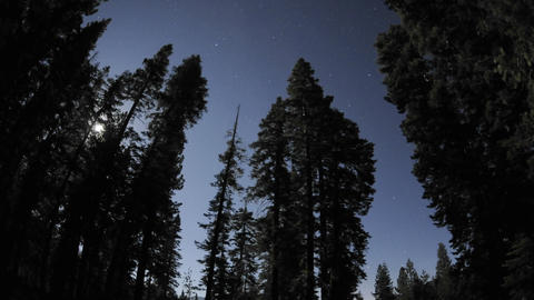 Time lapse of star trails, clouds and full moon rising through a forest at Jackson Meadow Reservoir Footage