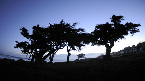 Time lapse of dawn behind monterey pines in Pacific Grove, California Footage