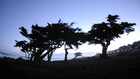 Time lapse of dawn behind monterey pines in Pacific... Stock Video Footage