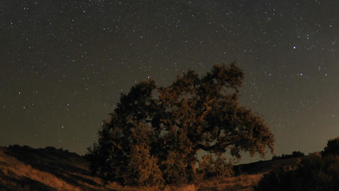 Night time lapse motion of star trails and Valley Oak Tree during a new moon in Oak View, California Footage