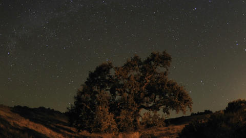 Night time lapse motion of star trails and Valley Oak... Stock Video Footage