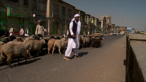 Shepherd drives goats and lamb through downtown Kabul,... Stock Video Footage