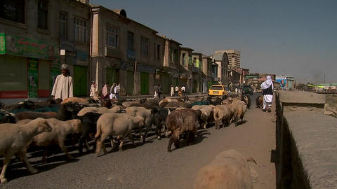 Shepherd drives goats and lamb through downtown Kabul, Afghanistan Footage