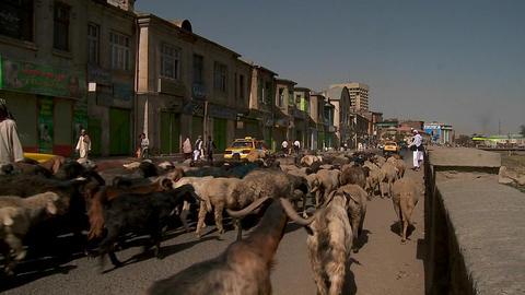 Shepherd drives goats and lamb through downtown Kabul,... Stock Video Footage