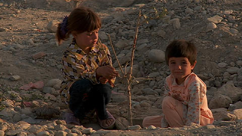 Children play with a dying tree on a hillside in Kabul, Afghanistan Footage