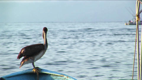 A pelican stands on the bow of a rowboat floating in water Stock Video Footage