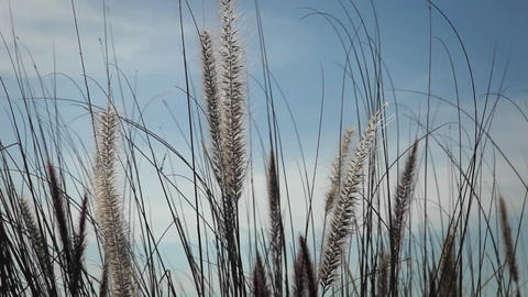 Gentle winds blow through wild grasses Stock Video Footage