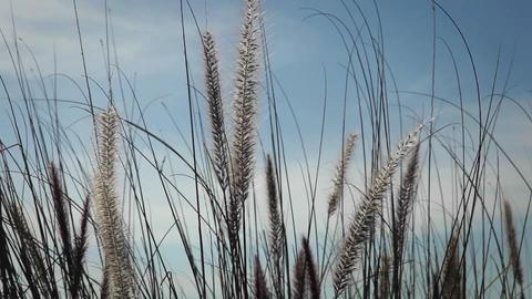 Gentle winds blow through wild grasses Stock Video Footage