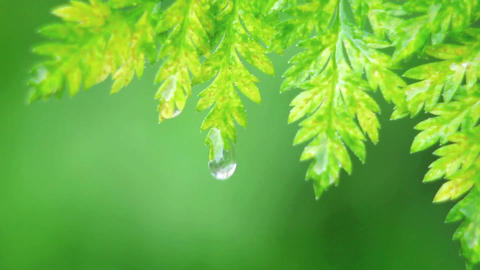 A drop of water falls off a leaf Stock Video Footage