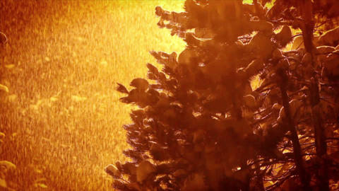 Snow falls heavily at night time Stock Video Footage