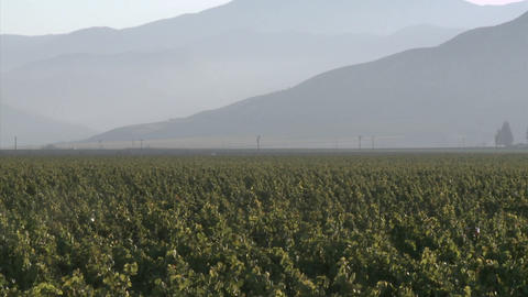 Vertical pan of a Salinas Valley vineyard in the Monterey... Stock Video Footage