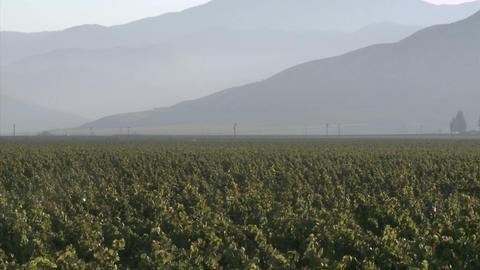 Vertical pan of a Salinas Valley vineyard in the Monterey... Stock Video Footage
