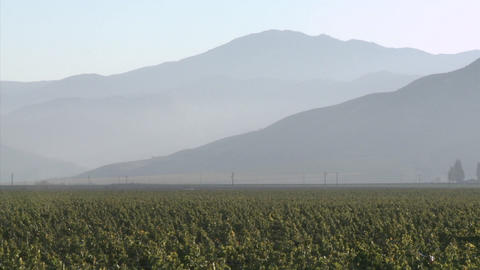Vertical pan of a Salinas Valley vineyard in the Monterey County wine country of California Footage