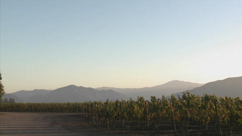 Pan across a Salinas Valley vineyard in the Monterey... Stock Video Footage