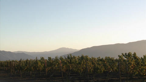 Pan across a Salinas Valley vineyard in the Monterey... Stock Video Footage