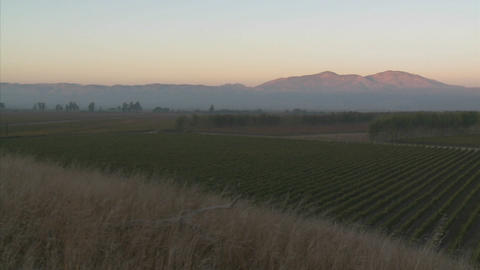 A slow pan across a vineyard in Monterey County, California Stock Video Footage