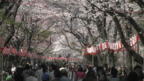 Pedestrians in Ueno Park during the cherry blossom season... Stock Video Footage