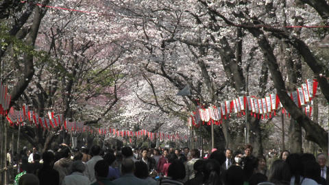 Pedestrians in Ueno Park during the cherry blossom season in Tokyo, Japan Footage