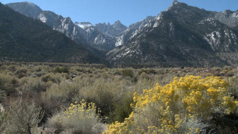 Vertical pan over wild flowers in the Alabama Hills and... Stock Video Footage