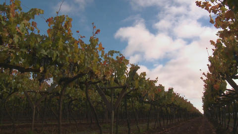 Time lapse of clouds, shadows and sunlight in a vineyard... Stock Video Footage
