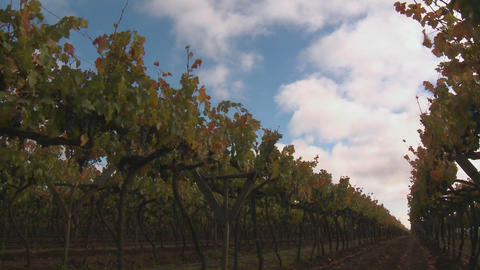 Time lapse of clouds, shadows and sunlight in a vineyard near Talca, Chile Footage