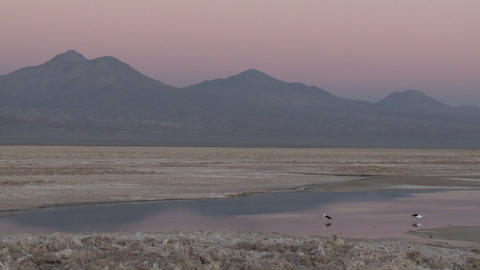 Pan across the flamingo habitat of Laguna Chaxa at the... Stock Video Footage