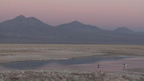 Pan across the flamingo habitat of Laguna Chaxa at the... Stock Video Footage