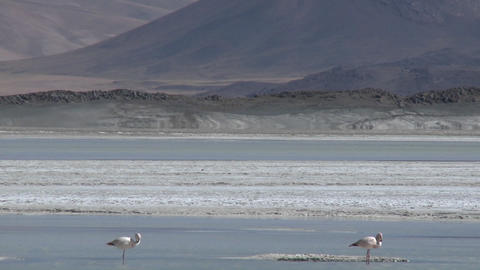 A vertical pan of a flamingo and the Salar de Laco in the... Stock Video Footage