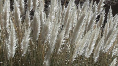 Desert grasses blow in the breeze in the Termas de Puritama, a thermal hot springs near San Pedro de Footage