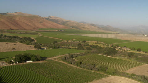 Helicopter aerial of a vineyard in the Santa Maria Valley, California Footage