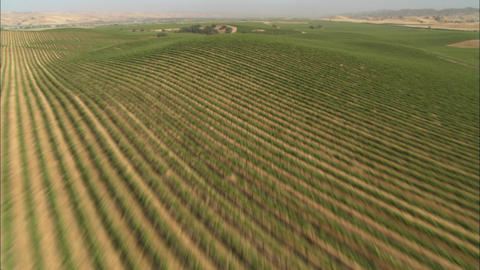 Helicopter low level aerial of Monterey County vineyards,... Stock Video Footage