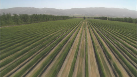 Helicopter aerial of a vineyard in the Salinas Valley, California Footage
