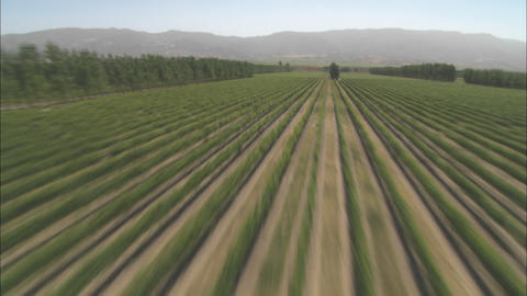 Helicopter aerial of a vineyard in the Salinas Valley,... Stock Video Footage