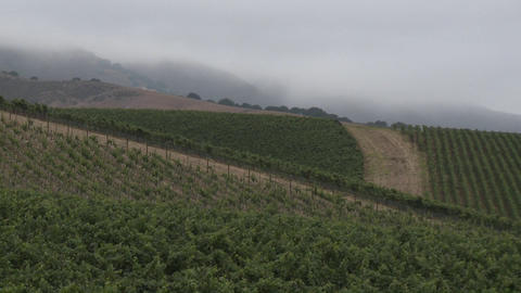 Time lapse of rolling fog in a Monterey County vineyard, California Footage