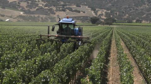 Machine pruning a Monterey County vineyard, California Footage