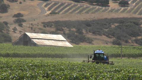 Machine pruning a Monterey County vineyard, California Stock Video Footage