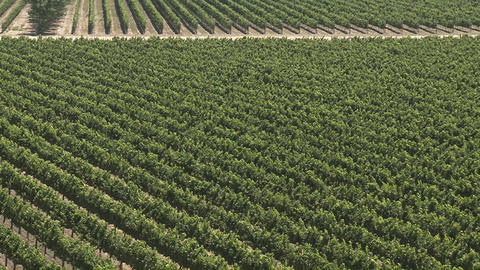 A vertical pan over a vineyard in the Salinas Valley wine country, Monterey County, California Footage