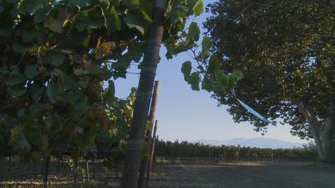 A Salinas Valley vineyard, Monterey County, California Stock Video Footage