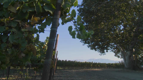A Salinas Valley vineyard, Monterey County, California Stock Video Footage
