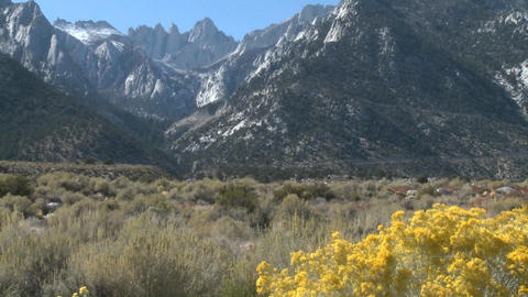 Golden flowers and Mt. Whitney, located above Lone Pine,... Stock Video Footage