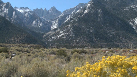 Golden flowers and Mt. Whitney, located above Lone Pine, California Footage