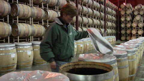 A winemaker checks the progress of a open barrel fermentation vintage Footage