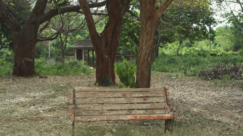 Lonely bench in the forest by the day nature background, In natural environment  Live Action