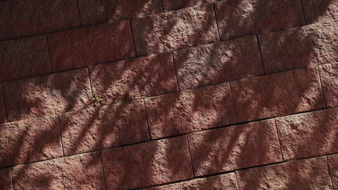 Beautiful shadows on a stone wall. Tree branches cast a shadow on the red wall Live Action