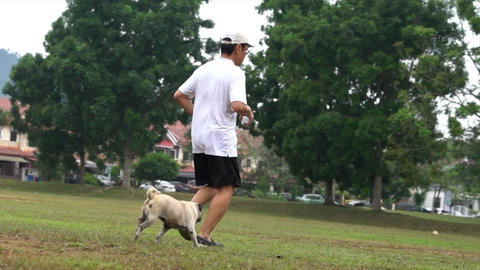 Pug dog and adult man running side by side in the field Live Action