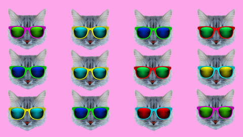 Cat with glasses style wiggle Animation