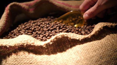 Coffee Beans Live Action